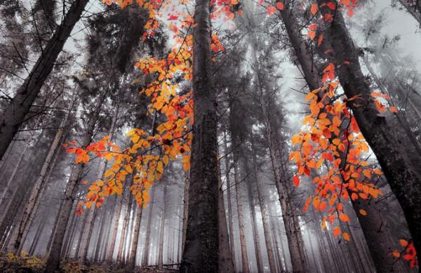 poze cu natura